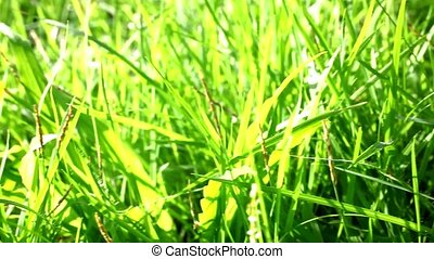 Grass under sunshine Shift macro