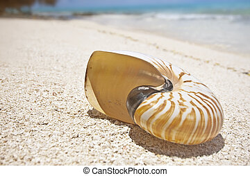 Shell on tropical beach - Nautilus shell on white sand beach...