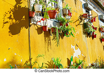 Traditional Lisbon wall - Old yellow wall with flower pots....