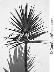Yucca plant over a white wall with shadow. Spain. Vertical