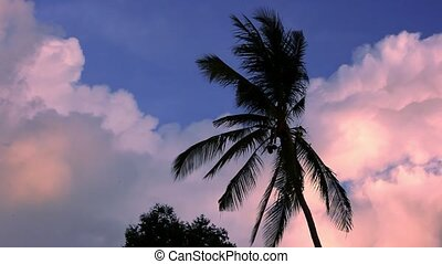 Dramatic sky with palm in the sunset time.