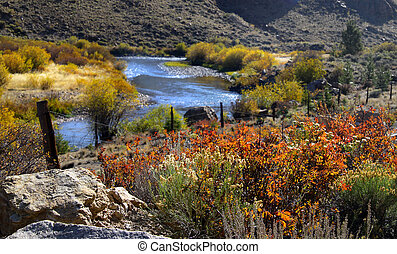 Running water - Stream flowing through colorful bushes in...