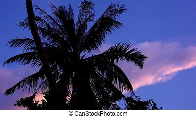 Dramatic sky with palm in the sunset time