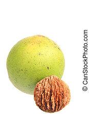 Black walnut (Juglans nigra) - Black walnut (Juglans nigra)...