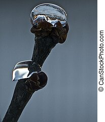 Sno Globe - A frozen drop of water on a Lilac branch like a...