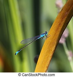 blue dragonfly sitting on a blade of grass close-up