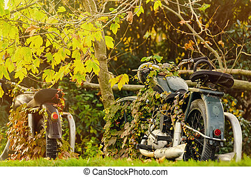 Motorcycle - Old Motorcycle In Autumn Foliage