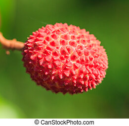 Lychee fruit Asia Thailand