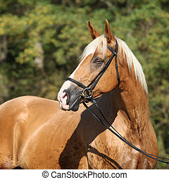 Beautiful amazing palomino warmblood with blond hair in...