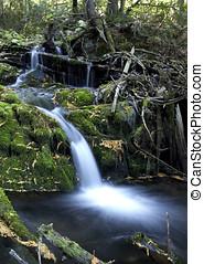 cascada, exuberante, bosque,  1