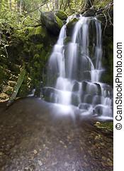 4, cascada, exuberante, bosque