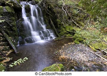5, exuberante, bosque, cascada