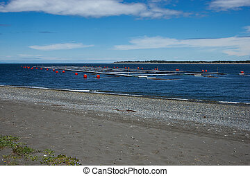 Salmon Farm - Large floating cages of a salmon farm in the...