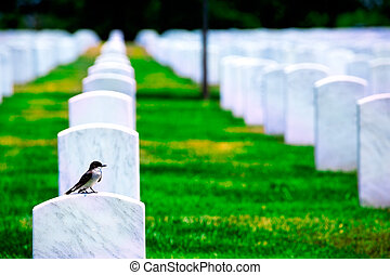 Arlington National Cemetery VA near Washington DC -...