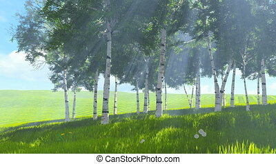 Birch grove edge in spring - Beautiful spring scene Sunny...