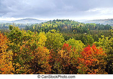 Fall forest - High view of fall forest with colorful trees