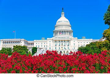 capitolio, edificio, Washington, CC, rosa, flores, estados...