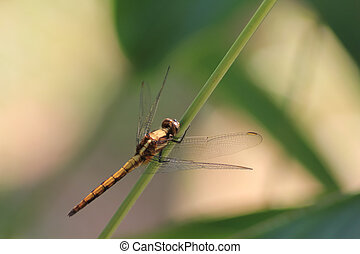 Dragonfly on leaf grass
