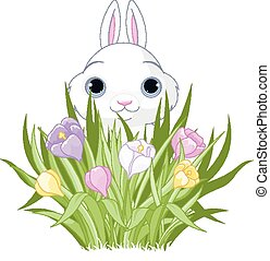 Easter Bunny with crocus bouquet - A cute Easter bunny sits...