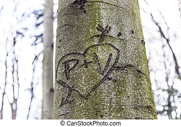 heart pierced with an arrow engraved in the bark of a tree