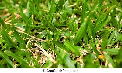 green grass macro close up. Video shift motion - green grass...
