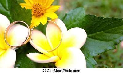 Close up wedding gold rings on the Thai flowers frangipani....