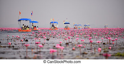 Thai tourist take boat visiting sea of red water lily festival at Nonghan lake in Udon Thani,Thailand.