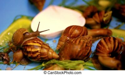 many snails crawling and eating plants Macro video shift...
