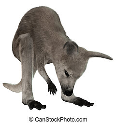 Joey - 3D digital render of a grey baby kangaroo isolated on...