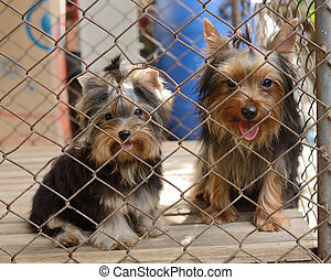 Two puppy locked in the cage