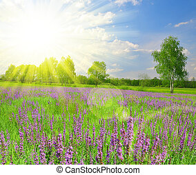 Spring meadow with flower. Composition of nature.