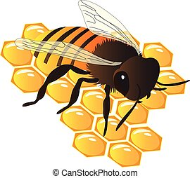 Bee on beehive vector illustration