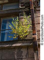 tree grows on a window