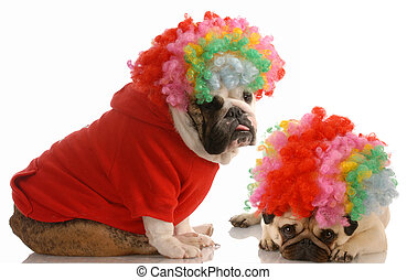 english bulldog and pug dressed up as clowns