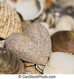 sandheart and shells - sand heart and shells on the beach