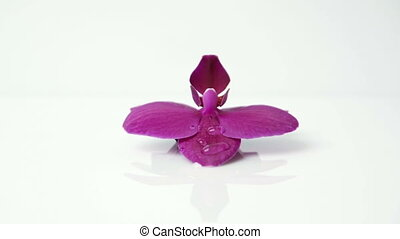 beautiful purple flower Orchid - On the beautiful purple...
