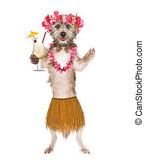 Dog Hula Dancer With Drink - Cute dog dressed as a Hawaiian...