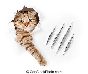 divertido, gato, en, papel pintado, agujero, con, garra,...