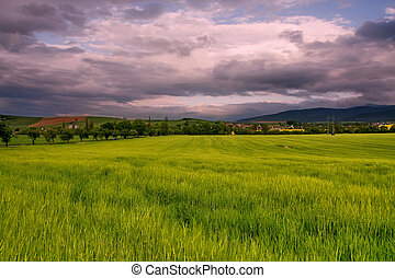 Sunny field with cloudy sky