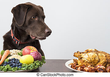 Dog with vegan and meat food - Dog staring at meat food
