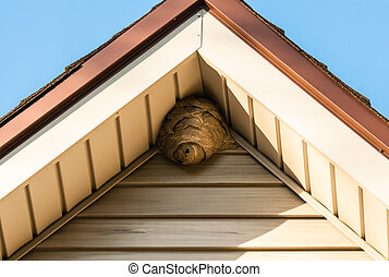Paper wasp nest on triangular roof siding - Gray paper wasp...
