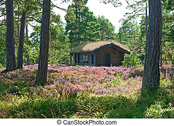 Wooden cabin on a wildflower meadow full of blooming heather...