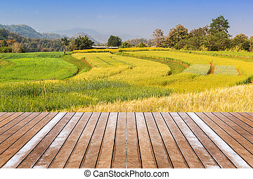Paddy field and terrace - Landscape shot paddy field shoot...