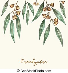 Watercolor eucalyptus leaves and branches. Vector...