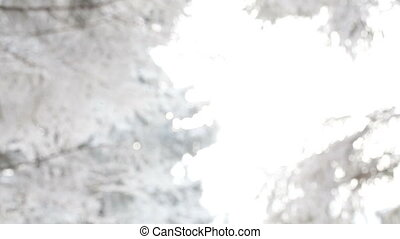 Winter forest - With snowy branches strewed snow