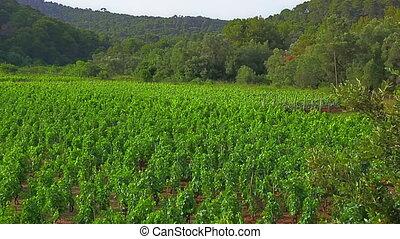 Field vines - FieldField vines vines near small village on...