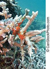 coral, arrecife, con, mar, esponja, en, el, fondo, de,...