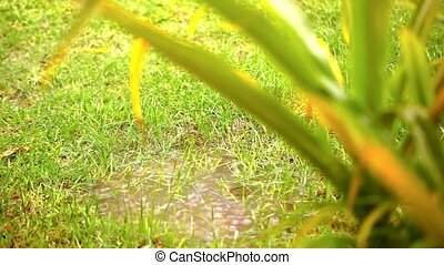 Puddle in a meadow after rain storm Video shift motion -...