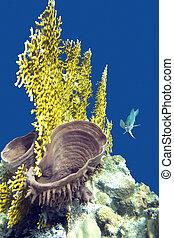 coral, arrecife, con, fuego, coral, y, mar, esponja, en, el,...