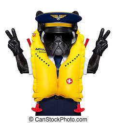 captain cockpit airline dog - french bulldog dog as an...